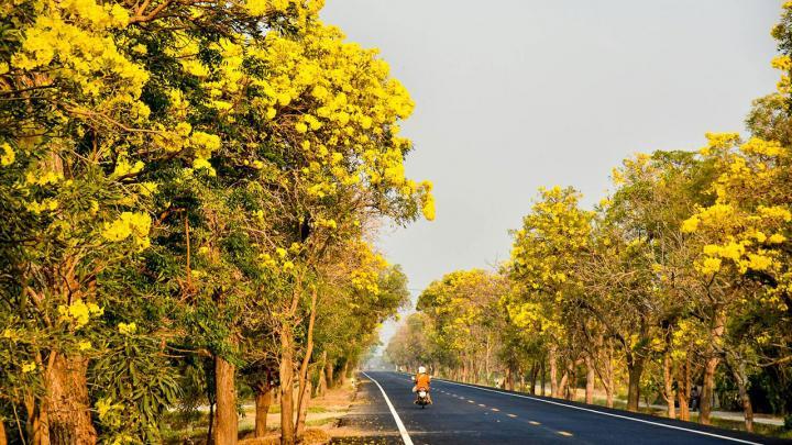 ถนนดอกคู สุพรรณบุรี
