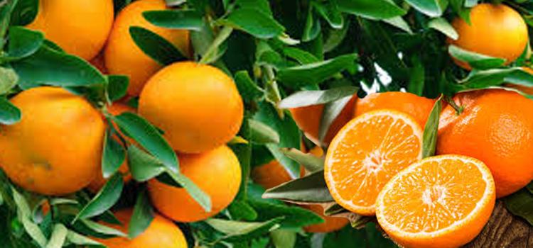 ส้มผลไม้ที่มีประโยชน์