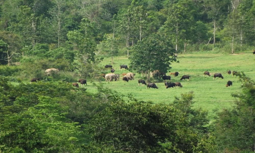 โครงการอนุรักษ์สภาพป่า