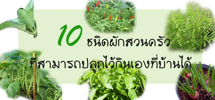 ผักสวนครัว 10 ชนิดที่ดีต่อสุขภาพ สามารถปลูกไว้ทานเองที่บ้านได้ 7
