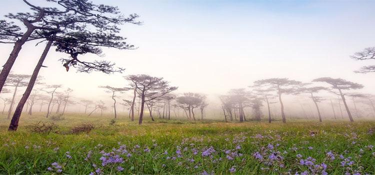 หน้าฝนเที่ยวอุทยานแห่งชาติภูสอยดาว