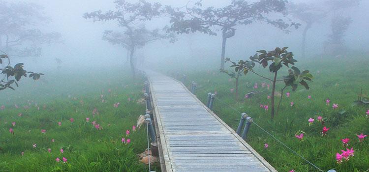 หน้าฝนเที่ยวอุทยานแห่งชาติป่าหินงาม (จังหวัดชัยภูมิ)