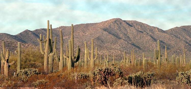 อากาศร้อนของประเทศแม็กซิโก