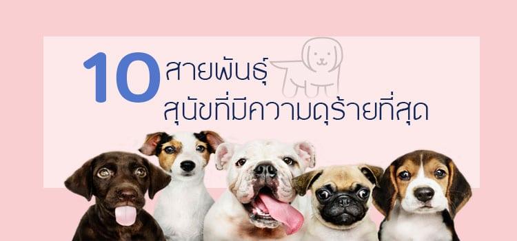 10 สายพันธุ์สุนัขที่ดุร้ายที่สุด