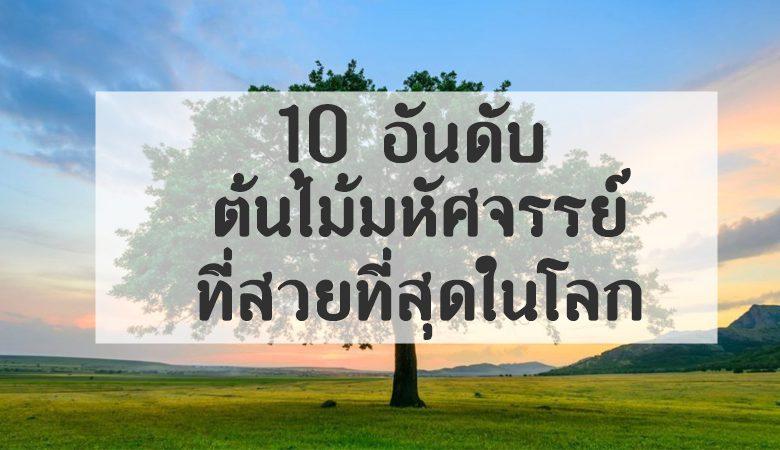 10 อันดับ ต้นไม้แปลก และสวยงามที่สุดในโลก 7