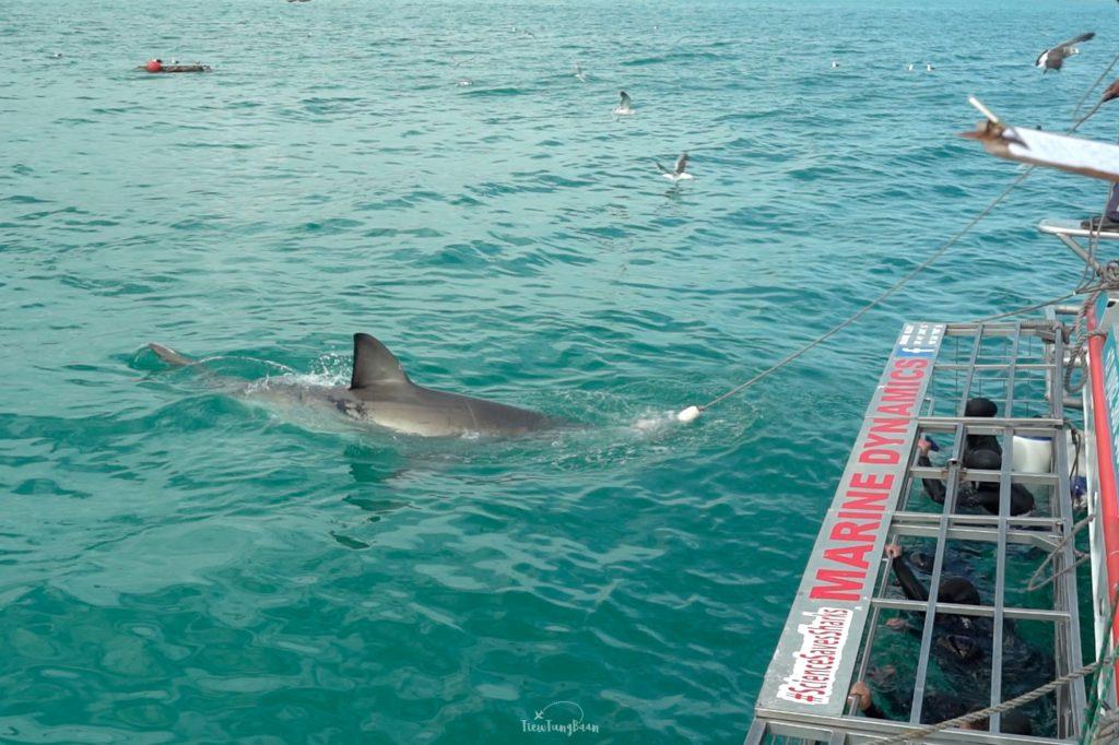 ว่ายน้ำกับปลาฉลาม